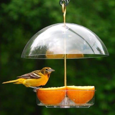 Seed Saver Domed Bird Feeder - BirdHousesAndBaths.com