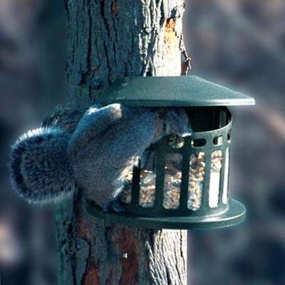 Squirrel Diner II - BirdHousesAndBaths.com