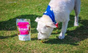 Here Is How Homemade Dog Food Put Kibble To Shame