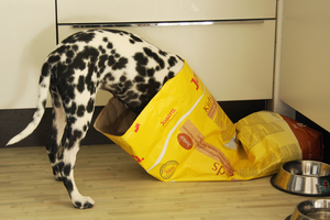 Best Dog Food: How to Choose What Ultimate Nutrition For Your Dog