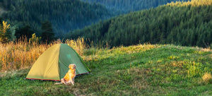 Tips On Camping With Your Dog.