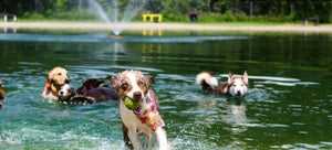 7 Dog Parks I Highly Recommend