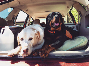 Our Top Summer Picks For Doggy Travel Gear
