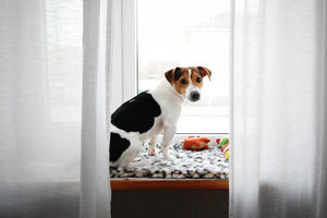 What Is Pet Anxiety? Can It Be Helped?