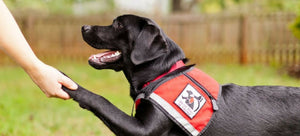 Service Dogs and Their Functions