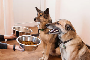 New FDA Study Shows Your Dog's Food May Put Them At Risk For Heart Disease