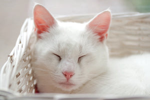 5 Grooming Tips For Cleaning Your Cat's Ears