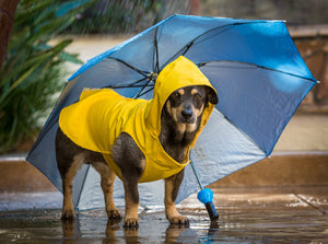 What Pet Owners Need To Know This Hurricane Season 2019