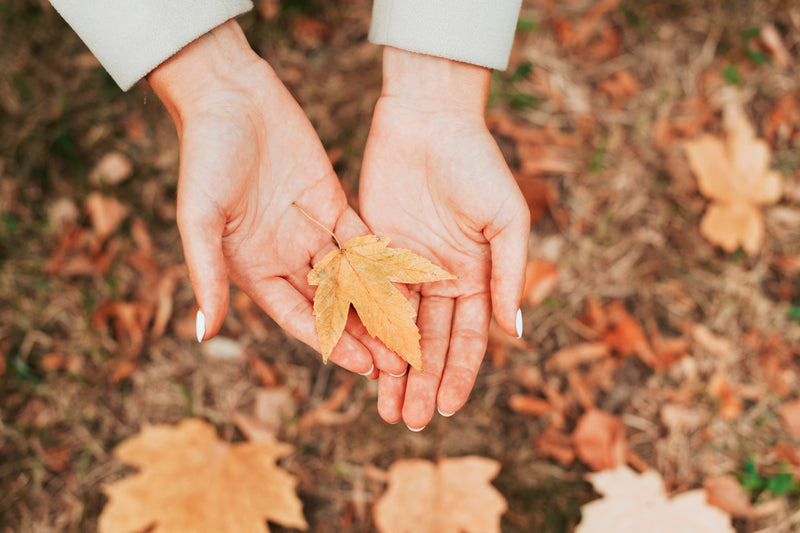 Leaves in the hands of a woman