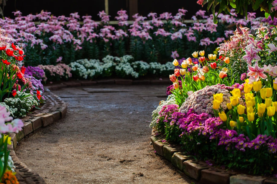 A beautiful garden full of colorful flowers