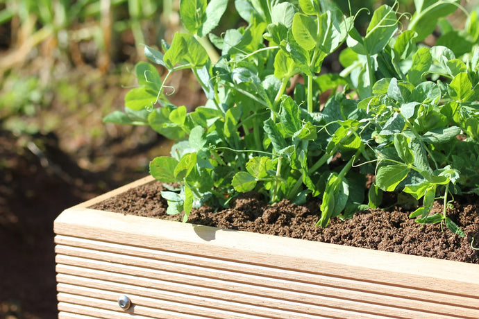 Buying and Growing with Raised Beds