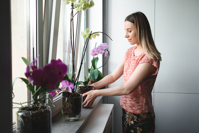 Gardening in an Apartment: What You May be Doing Wrong