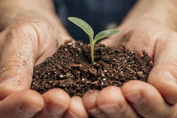 Hands holding soil with plants