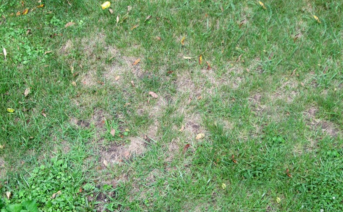 Lawn dying