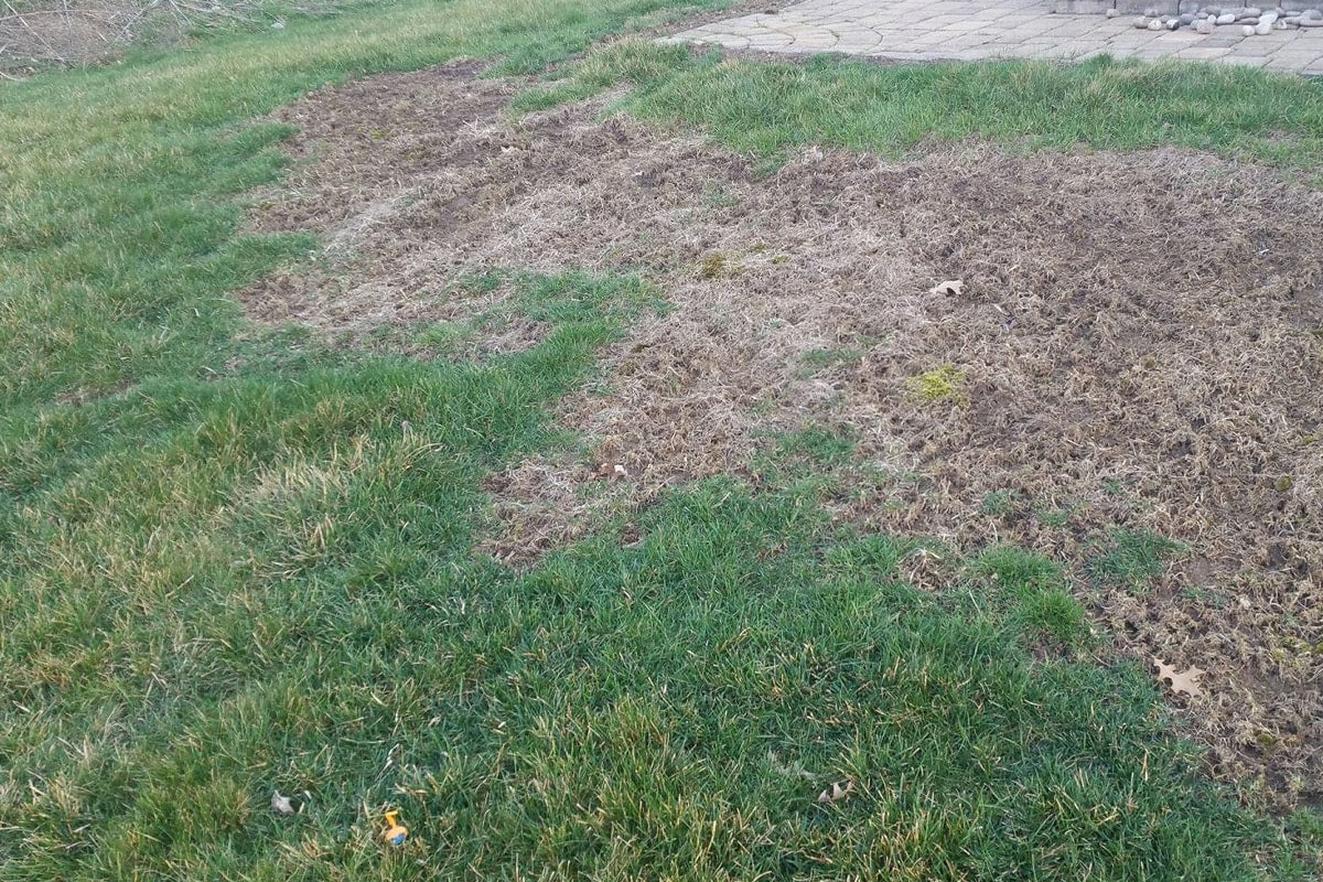 Grass dying
