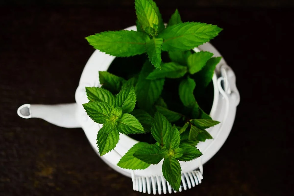 peppermint on the pot
