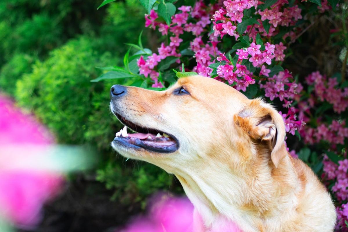 A dog with flower on the background