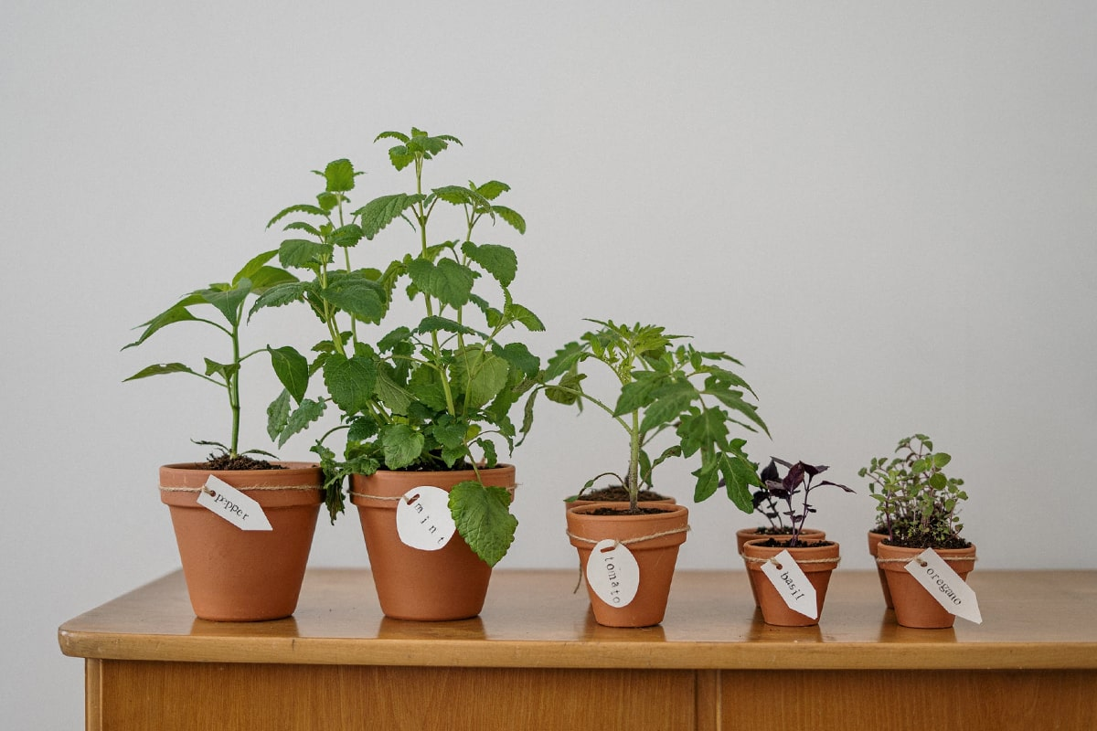 Plats in the small pots