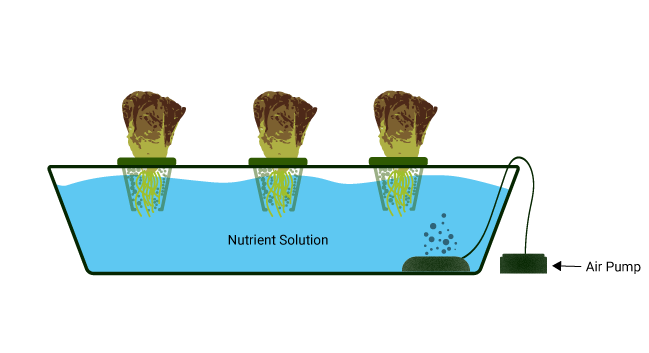 Water culture hydroponic system illustration