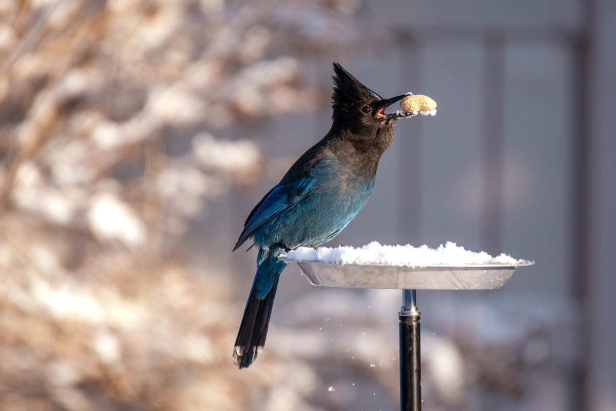 Bird eating seeds in snow