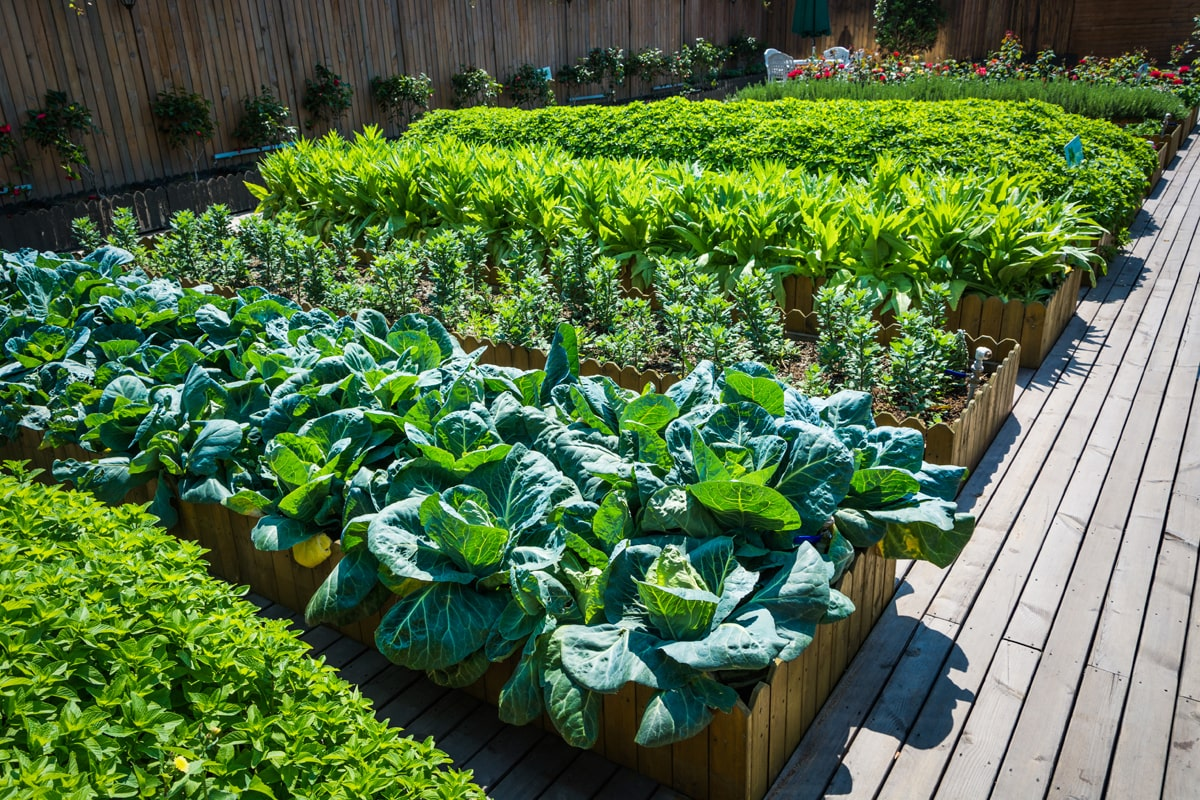 A row of raised bed planters