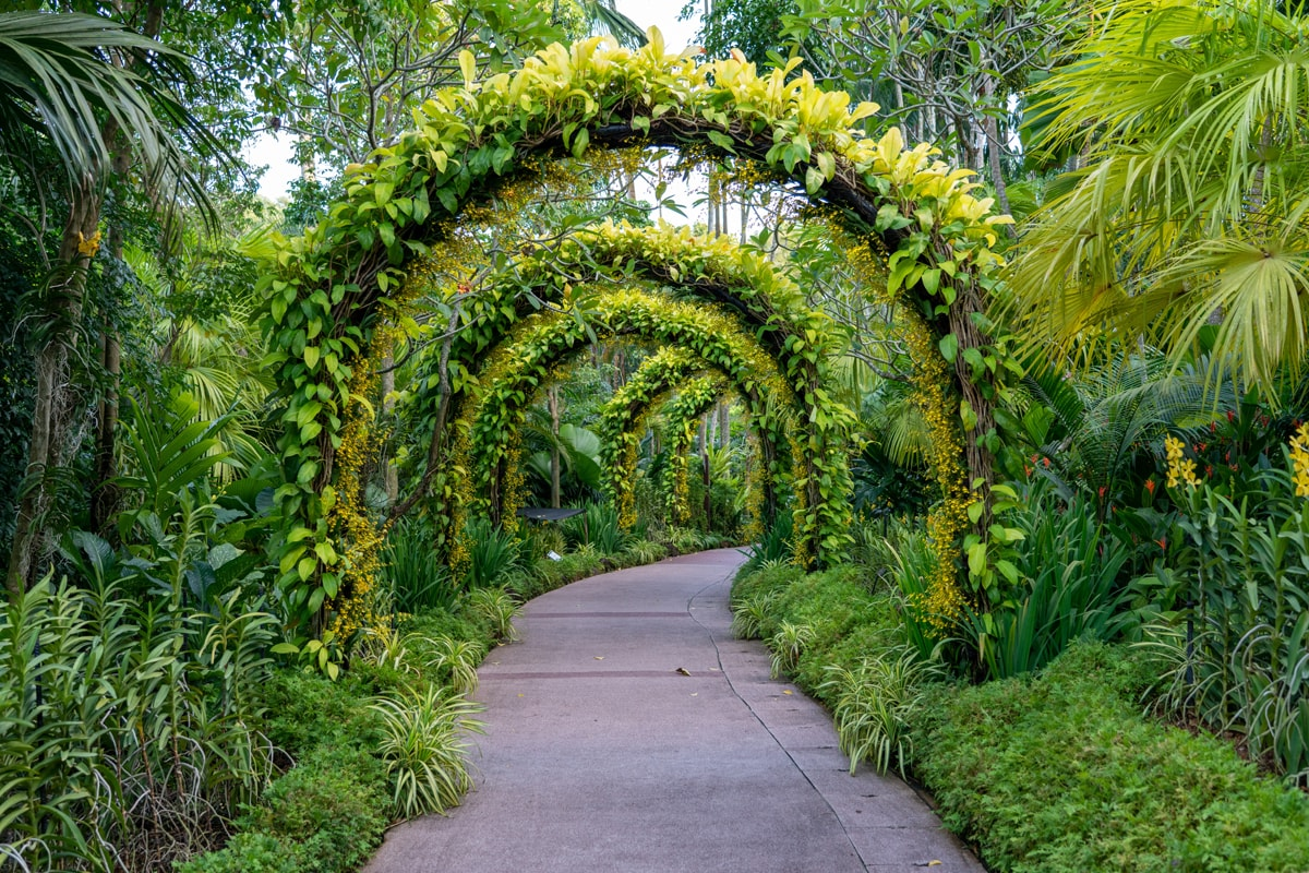 Beautiful green garden with a pathway in the middle