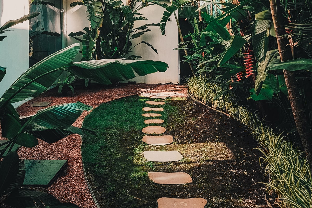 A garden with a clear pathway to avoid stepping on plants.