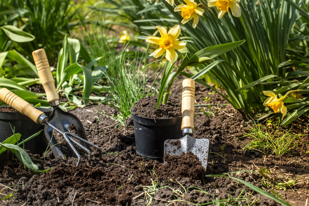 Gardening tools being used in the garden