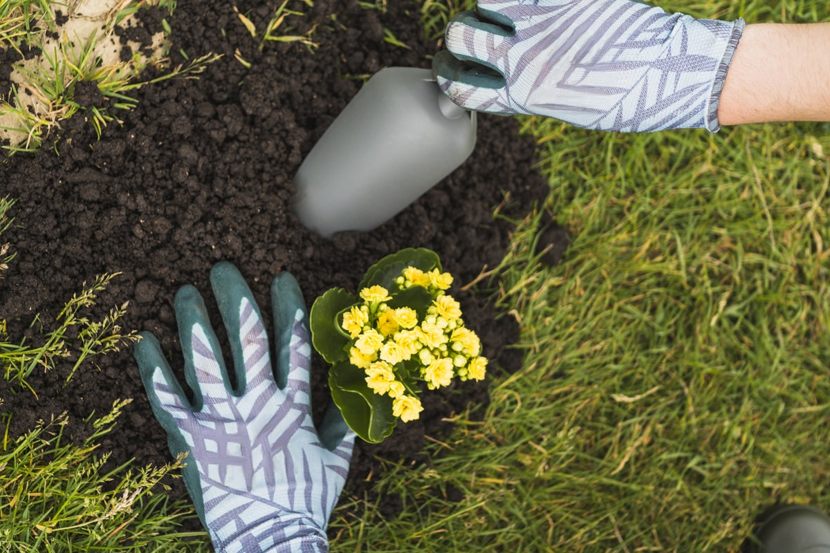 Person adding compost or mulch to plants
