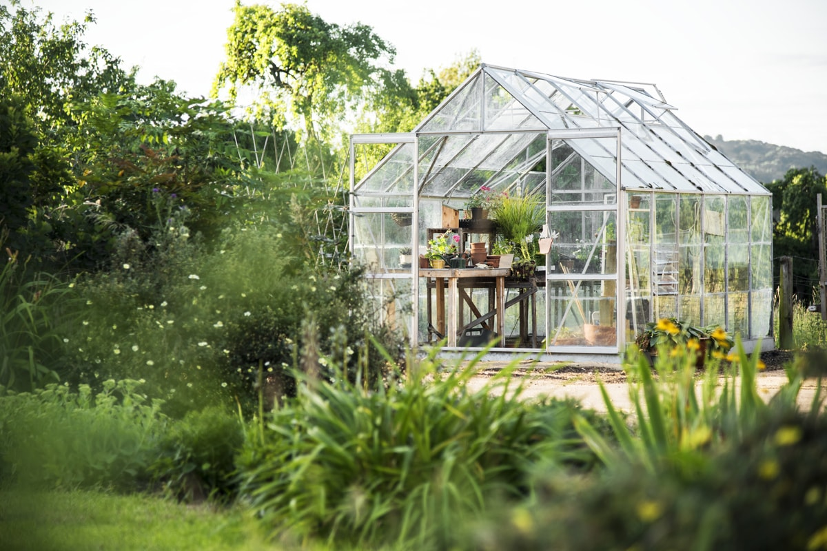 A greenhouse made to protect plants that can't withstand cold weather