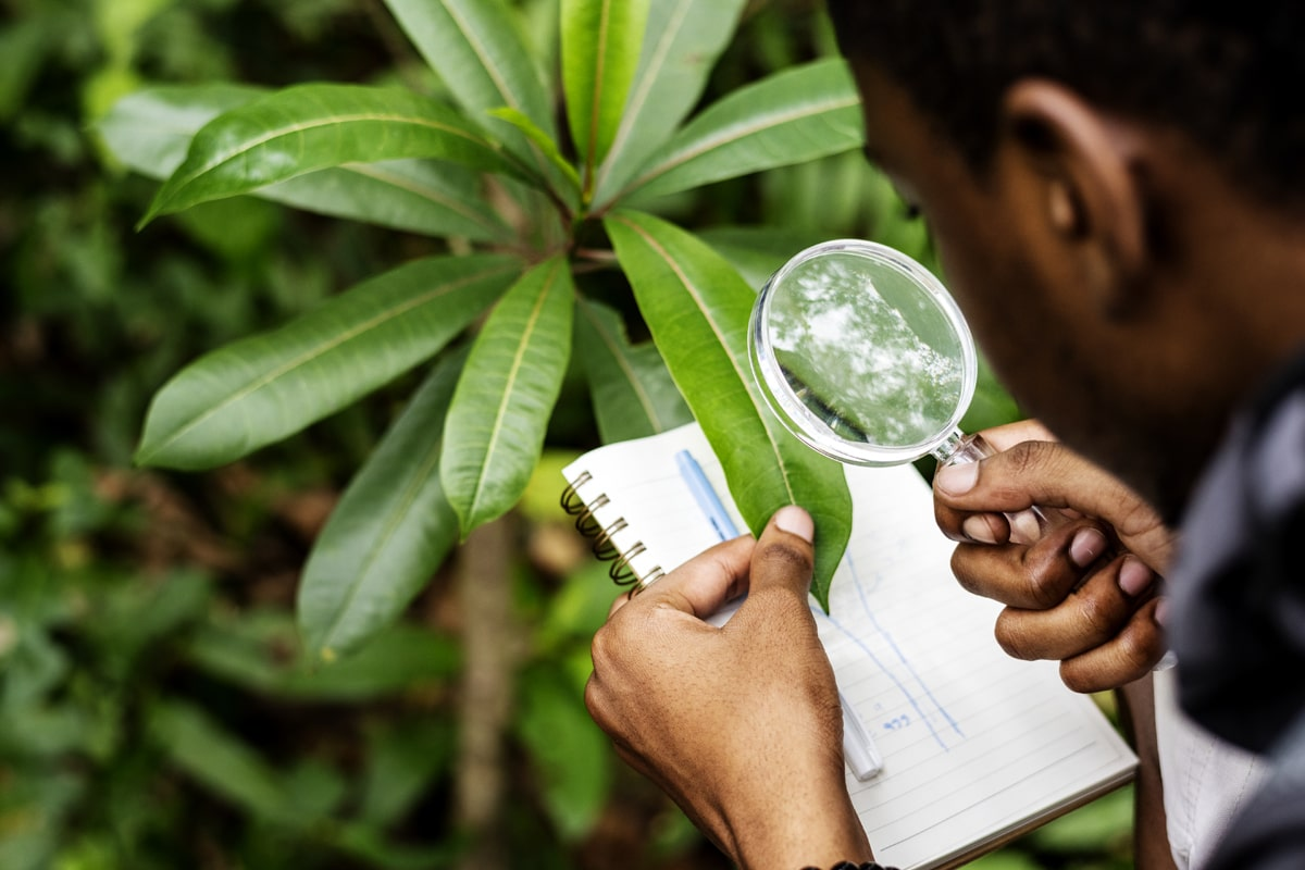 A man taking notes of his plant's growth