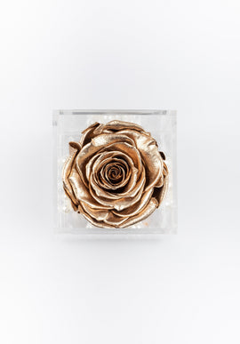Mini EternalBloom™ Rose