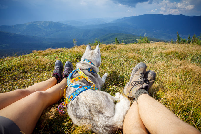 Take A Hike! How To Find and Plan A Dog-Friendly Hike