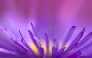 FREE 3 Day Violet Flame Remote Healing Attunement
