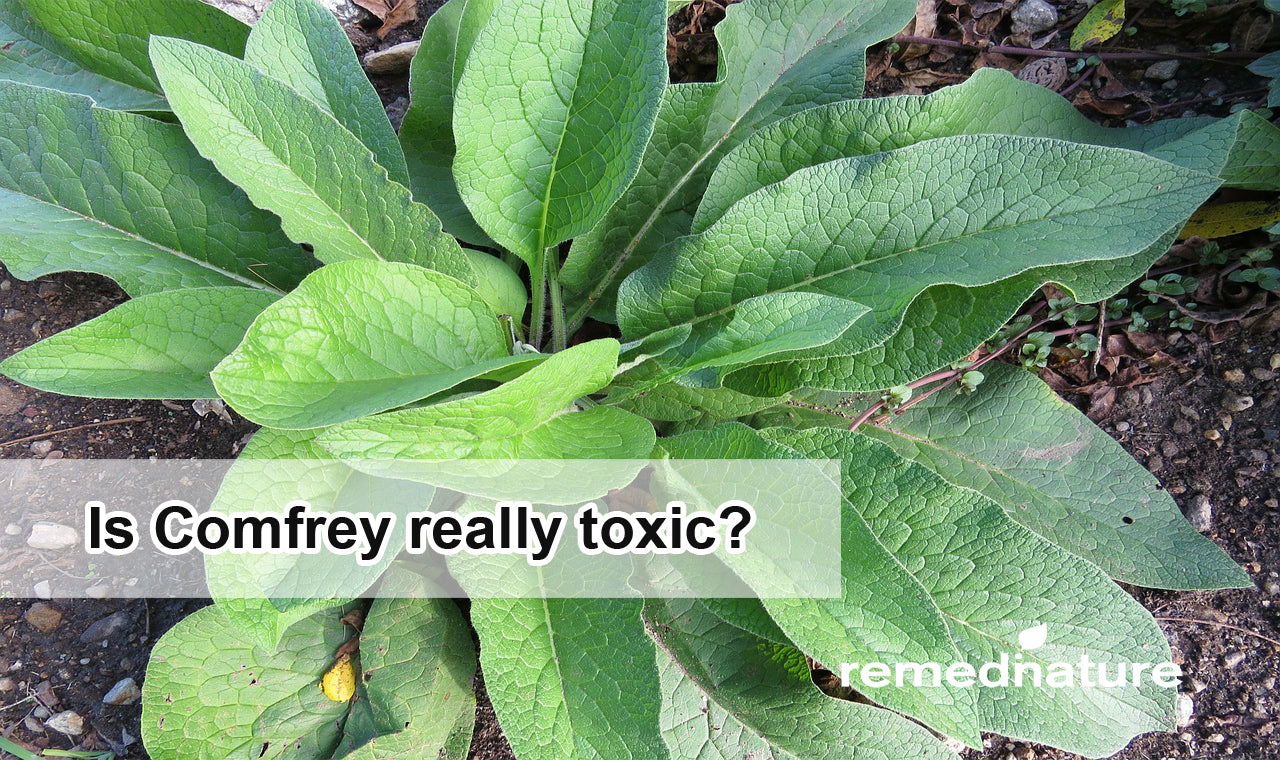 Is Comfrey really toxic?