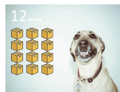 PetBox - 12 MOIS