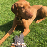 Beautiful hungarian vizsla easter games for dogs
