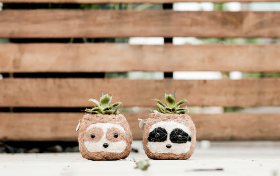 Sloth planter giveaway