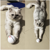 Automatic Self Rotating Rolling Balls for Cat