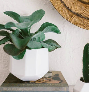 Riveted Indoor Planter for Plants - giftsvistas.com