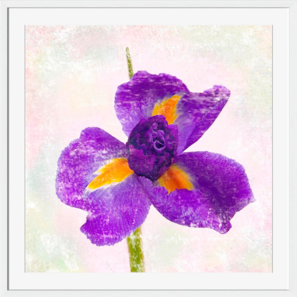 Iris - Wall Art-Wall Art-Surya-Wall2Wall Furnishings