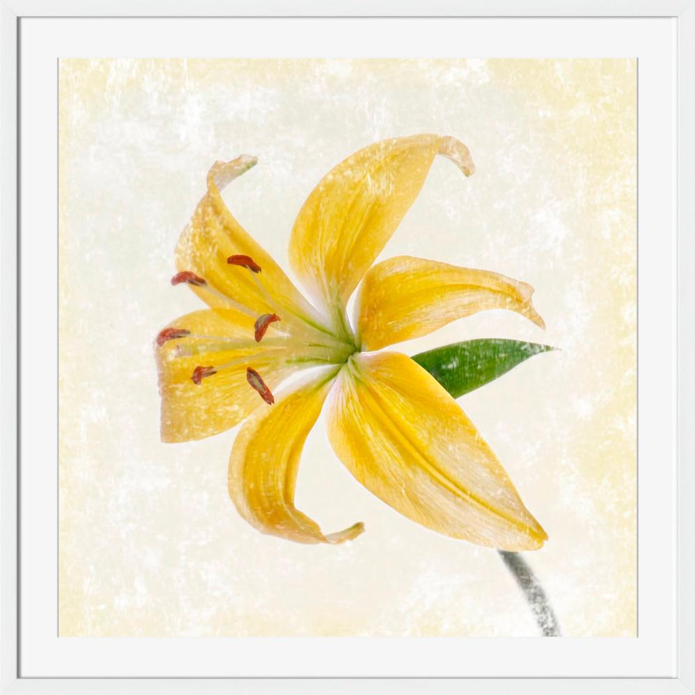 Yellow Lily - Wall Art-Wall Art-Surya-Wall2Wall Furnishings