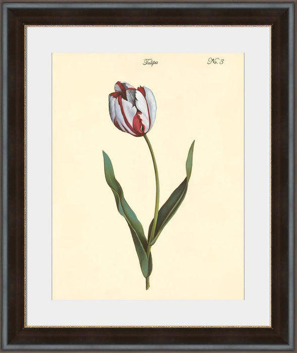 Tulipa No.3 - Wall Art 2-Wall Art-Surya-Wall2Wall Furnishings