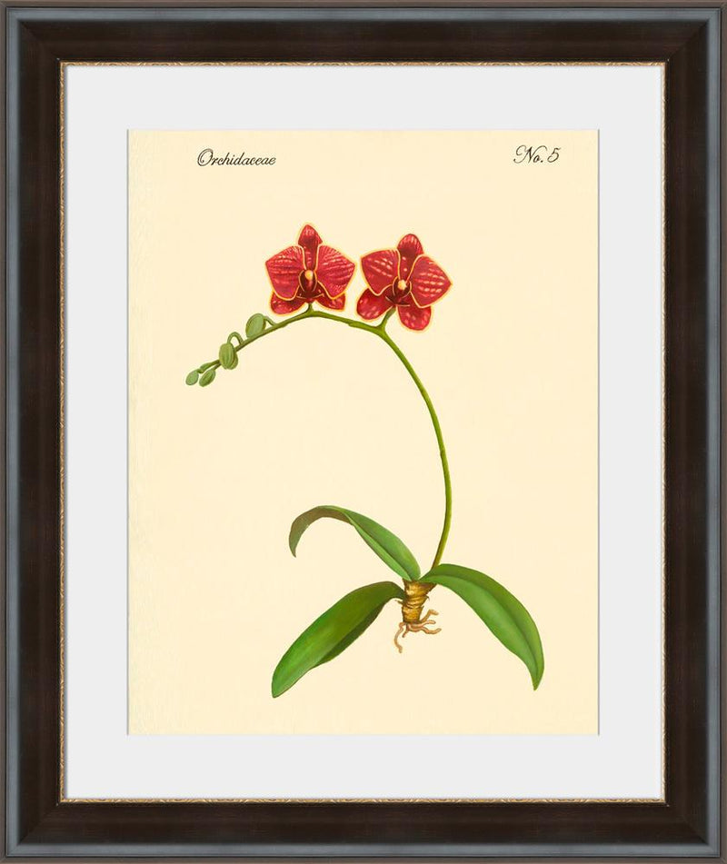 Orchidaceae No.5 - Wall Art-Wall Art-Surya-Wall2Wall Furnishings