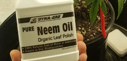 All About Neem