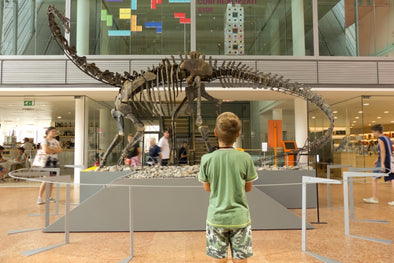 Kid looking at a large dinosaur fossil in a museum