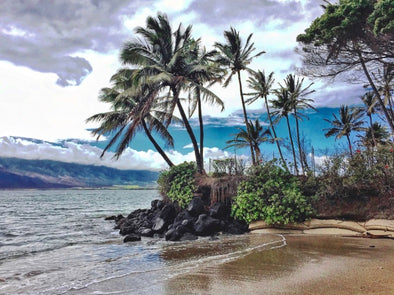 Maui beach with palm trees