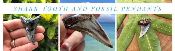 Shark Tooth and Fossil Pendants
