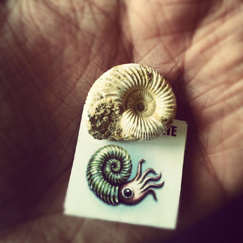 A tiny ammonite fossil next to a depiction of an ammonite
