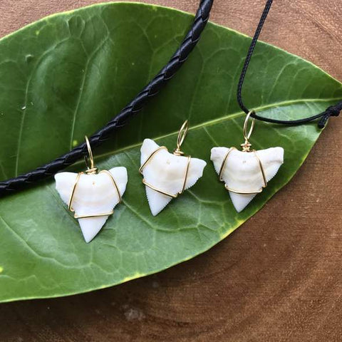 Bull Shark Tooth Pendant- Upper Jaw on a leaf